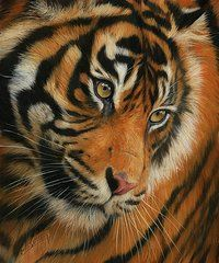 Animal Paintings: David Stribbling - Art - Portrait of a Tiger by David Stribbling