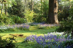 Goodnestone Park Gardens Woodland garden Summer house garden