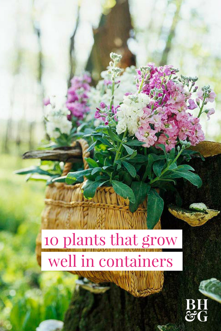 10 plants that grow surprisingly well in containers potting soil 10 plants that grow surprisingly well in containers izmirmasajfo