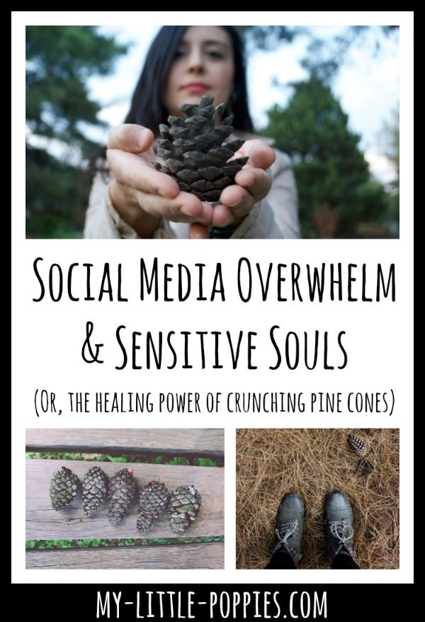 """Social Media Overwhelm & Sensitive Souls (Or, the healing power of crunching pine cones) 