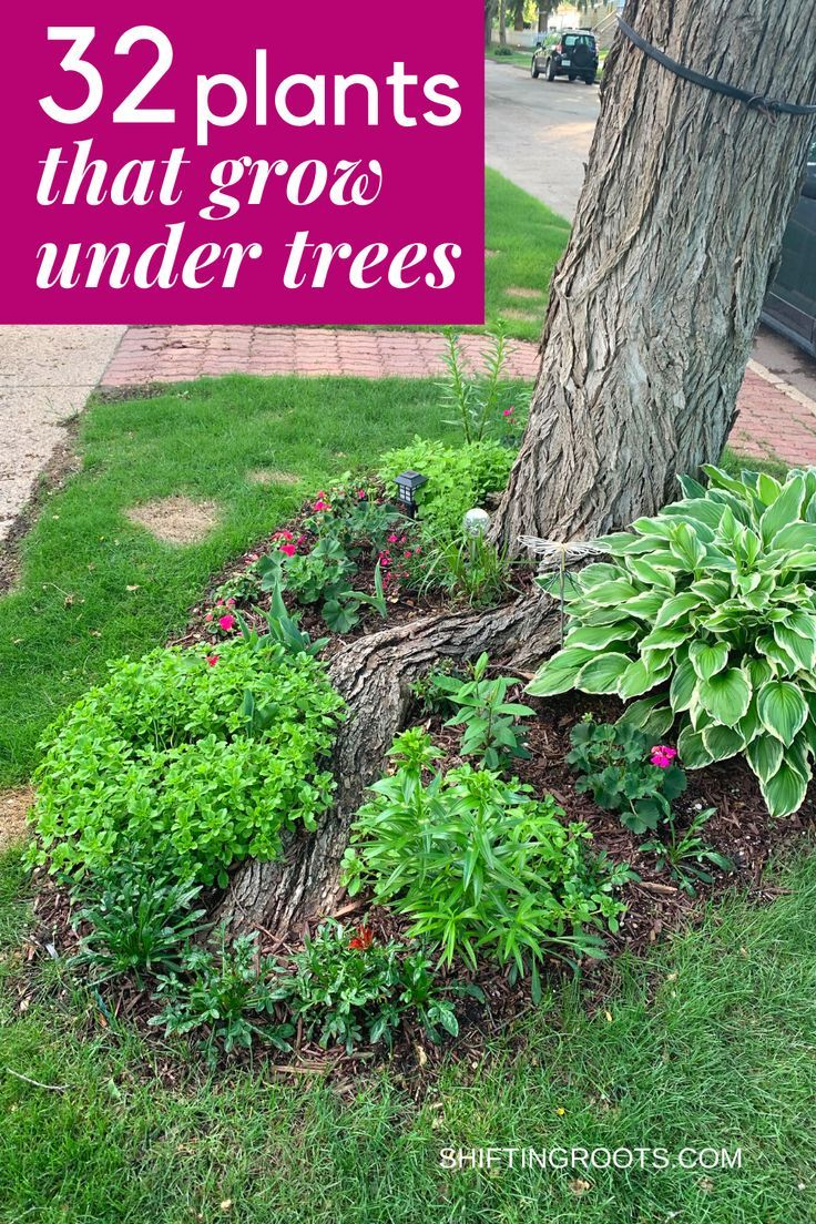 Trying to landscape a flower bed in your front yard  underneath a tree and have no idea what to plant?  It's not as hopeless as it seems.  Here are 32 ideas of the best flowers, bushes, and ground cover you can grow.