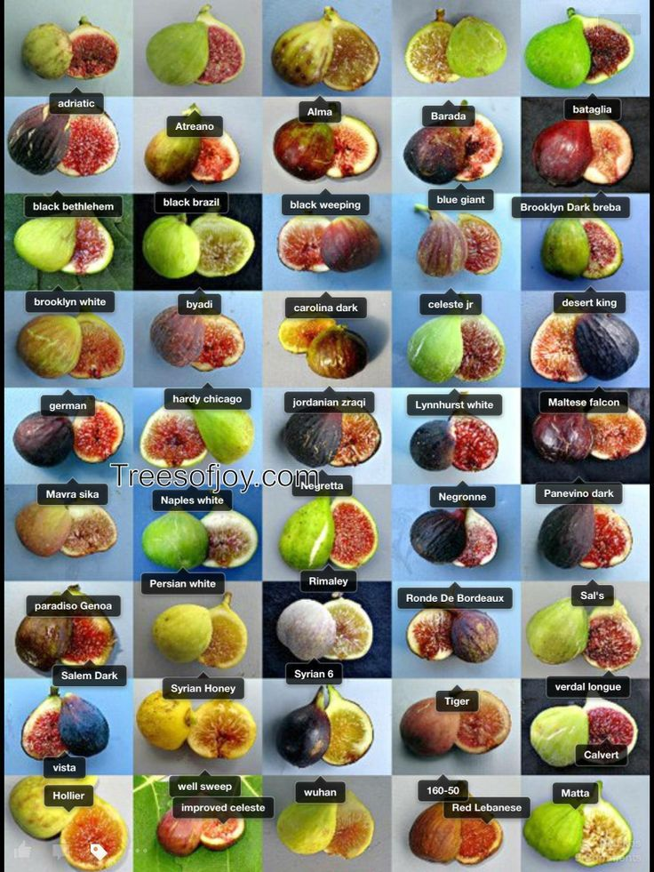 Photographs Fig Varieties California Fig Varieties Fig Fruit Fig Recipes