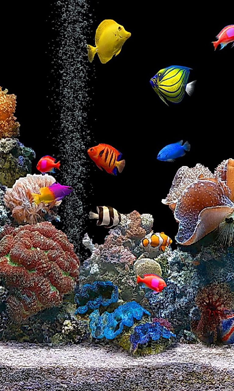 Pin By Navarro Edwards On Salt Water Aquarium Fish And Invertebrates Corals Fish Wallpaper Colorful Fish Beautiful Tropical Fish