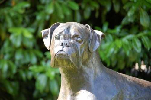 Bronze Resin (bronze On Order) By Marie Ackers Titled: U0027Boxer (Bronze Dog  Life Size Garden/Yard Sculptures)u0027.