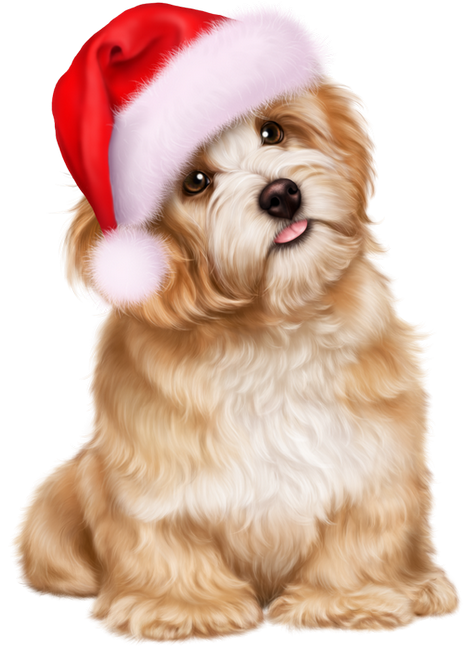 Pin by Jo =^,^= Allen on _Merry Christmas Dogs