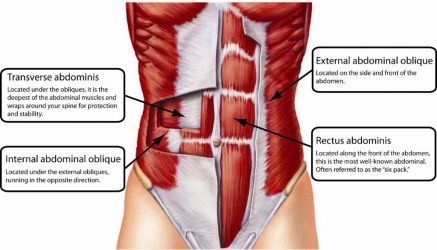 core ab muscles incl TA overlay.jpg
