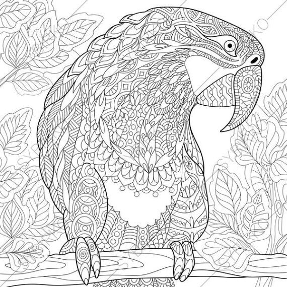 Coloring Pages For Adults Macaw Parrot Adult Coloring Pages