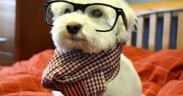 This Is My Scholarly Look Via Http Bit Ly 1zoeutk Http Bit Ly 1l551ow Rescuedog Dog Itsarescuedoglife Dogs Hipster Dog Dog Life