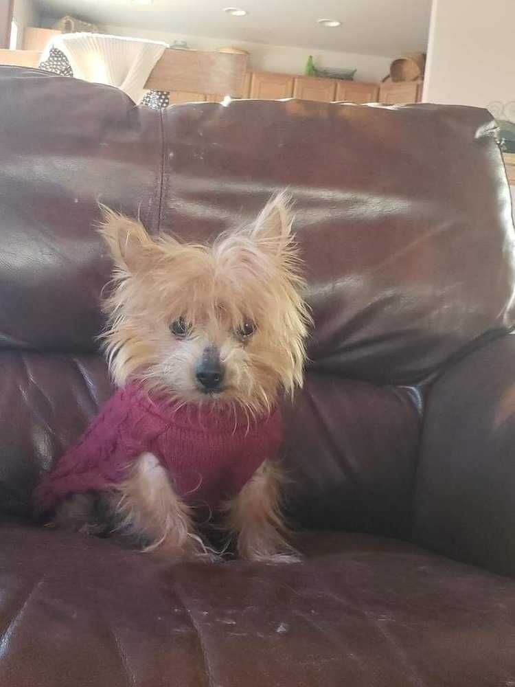 Adopt Dorothy on | Rescue me! | Animals, Dogs, Pet adoption
