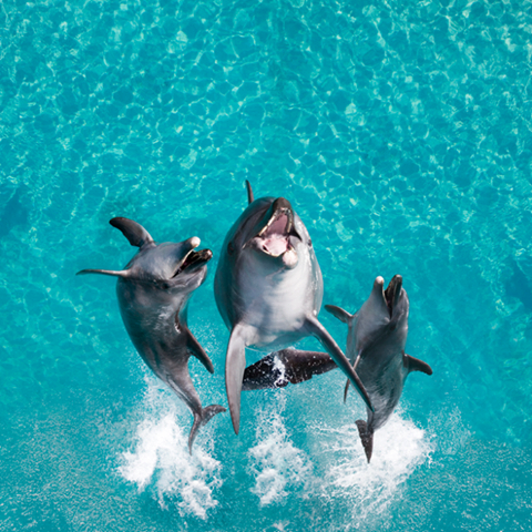 We all love Dolphins!  Go to www.YourTravelVideos.com or just click on photo for home videos and much more on sites like this.