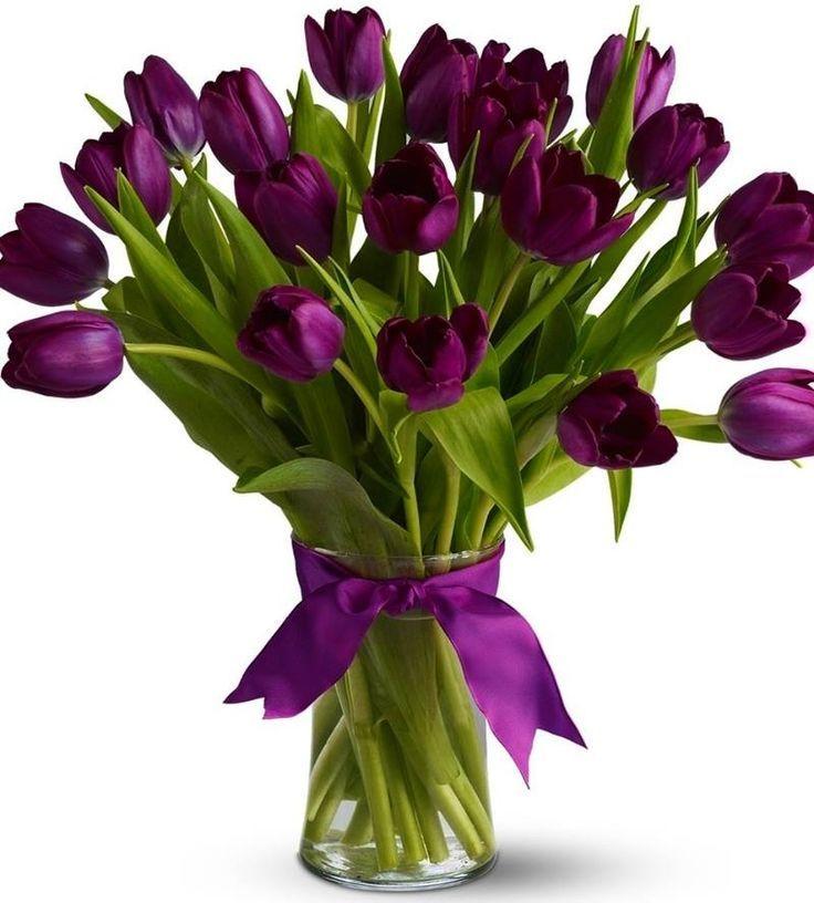 Image result for violet coloured tulips flower