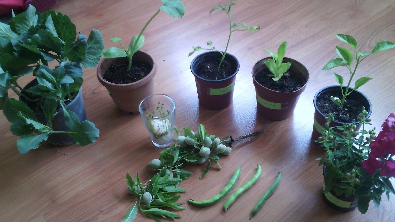 Actividades Para El Primer Ciclo De Educación Infantil Proyecto Las Plantas Actividades Montessori Plantas Huertos Escolares