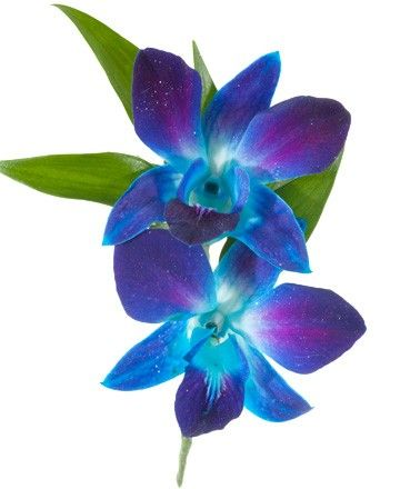 Dendrobium Orchid Boutonniere Blue A Boutonniere With Two Blue Dendrobium Orchids Item 1389 Descript Blue Orchid Tattoo Blue Orchids Flower Bouquet Tattoo