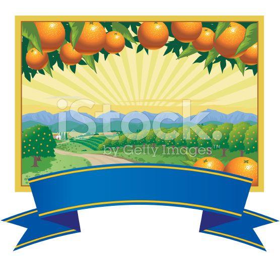 Orange Groves royalty-free stock vector art