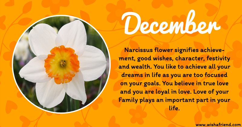 Pin By Sleep Deprived On Random Things About Me December Birth Flower Birth Flowers Birth Month Flowers