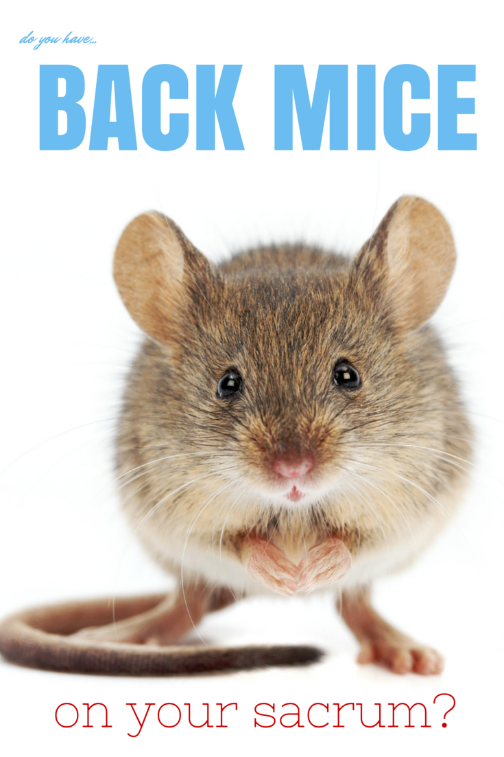 Are Back Mice Real? Getting rid of mice, Mouse traps
