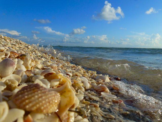 Shells At Blind P Manasota Key Floridacaptiva