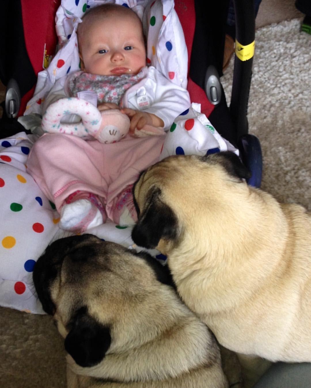 #throwbackthursday to when we were the best guard pugs to our hooman niece ❤️ #macpugs #qtpugs #purepugspp #pug #pugs #pugsofinstagram #pugbasement #pugsproud_feature #badasspugclub #bubblebeccahat #DailyDoseOfPugs #eddthepug #flatnosedogsociety #gilesfriends #heyportiapickme #henrys1inamillion #itslolathepug #mysquishyliciousfriends #puglife #speakpug #squishyfacecrew #thetomcoteshow #zerozeropug #instapug #pugsyouwilllove #Smilingpugs #obsessedwithpugs