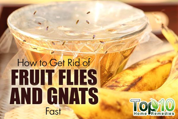 How To Get Rid Of Fruit Flies And Gnats Fast Top 10 Home Remedies Fruit Flies Fruit Flies In House Fruit Fly Trap