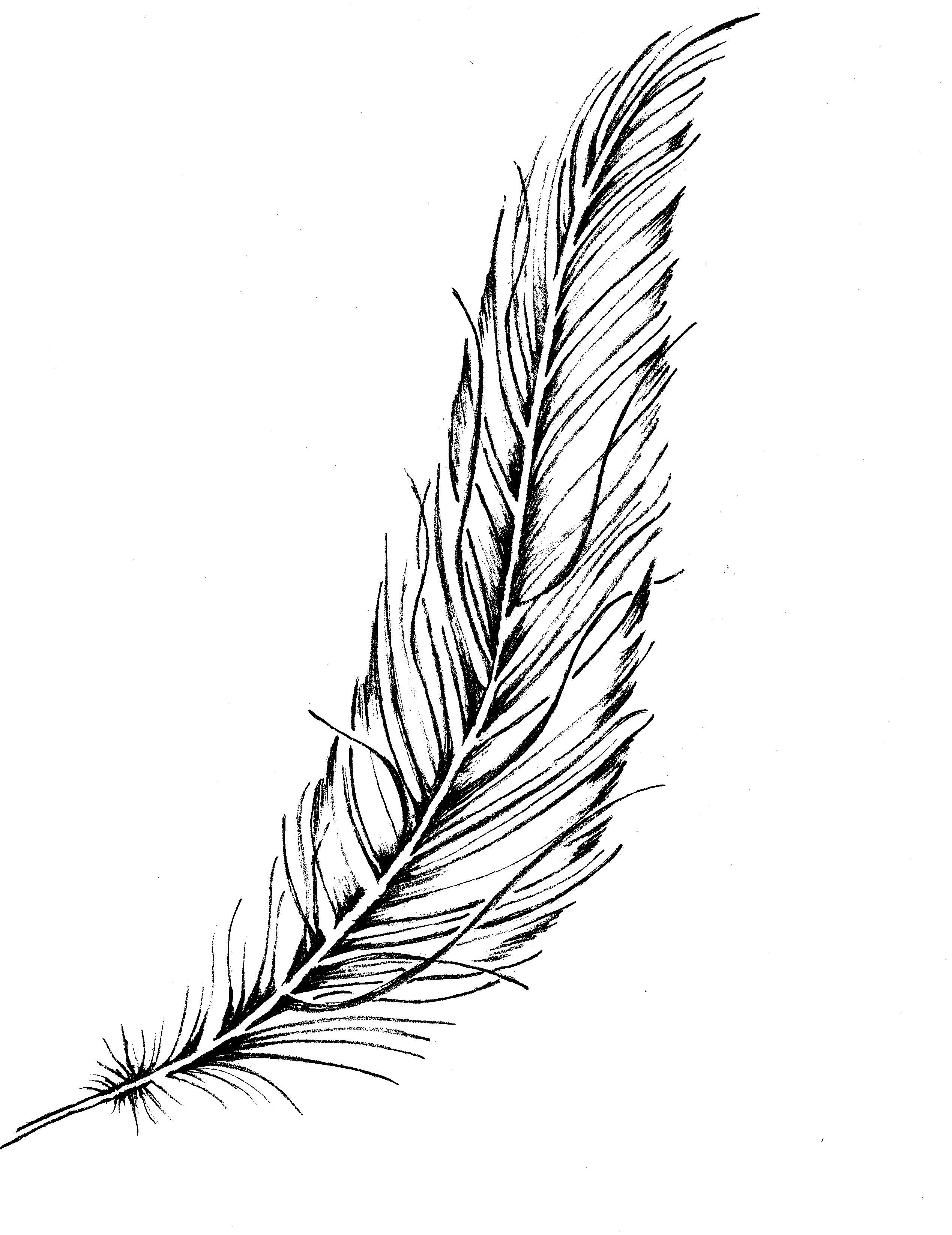 Line Drawing Of Quill : Feather tattoo ink drawing original silverwingsart