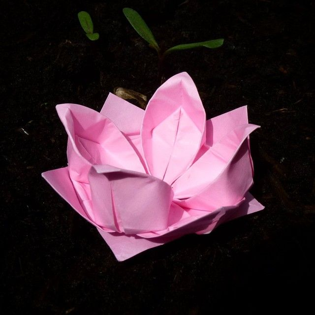 May 5th 2015 Origami lotus flower I made today. #origami #lotus #flower #diy #craft #handmade #paper #folding #125