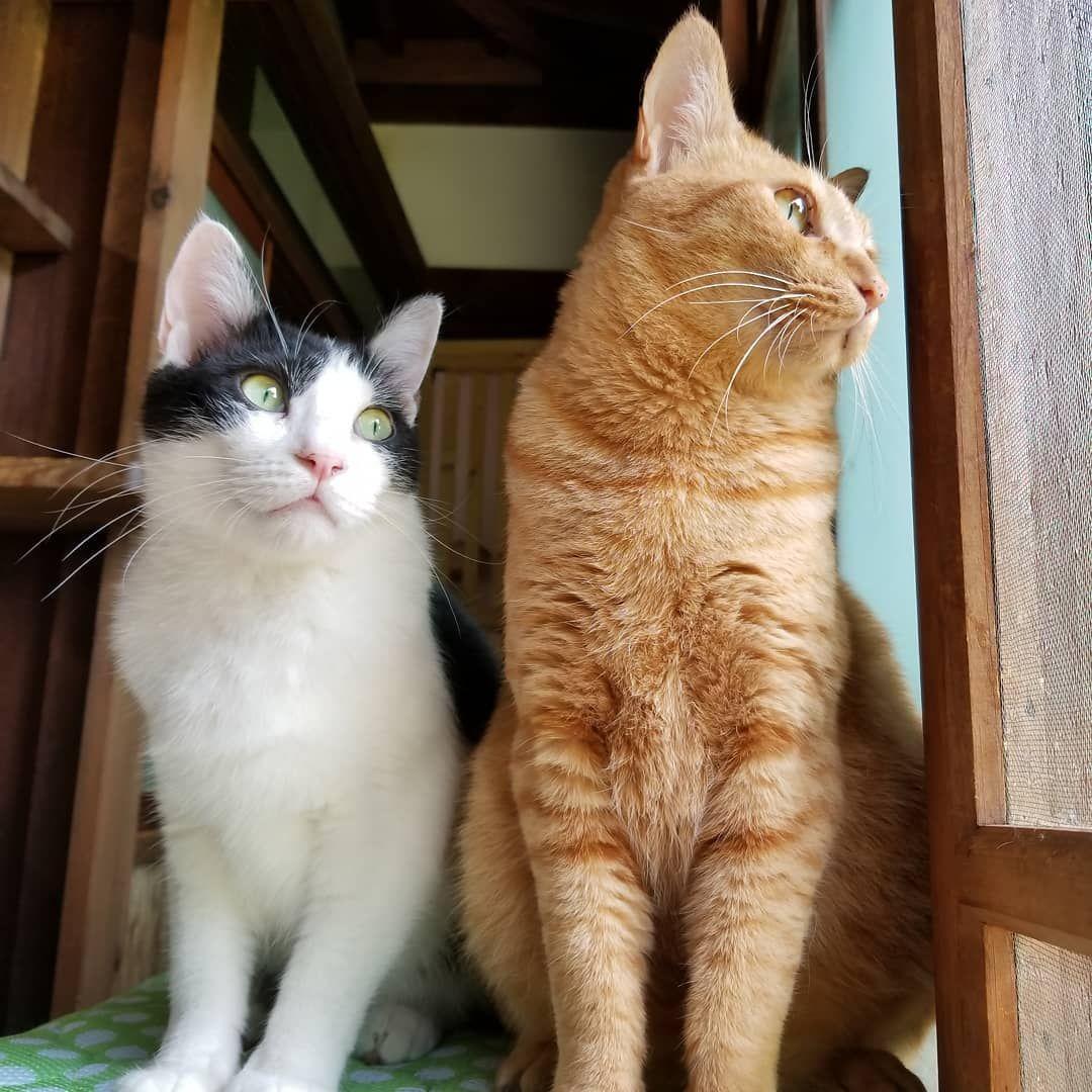 里親募集型保護猫 古民家 Cafe Gatto On Instagram お外に夢中ないご メンマ 本日はご予約でいっぱいになりました 明日は13時に1名だけ空きがあります 来週はまだ余裕ありです 定員を今までの半分に人数制限してるのでたくさんご案内できず Cats Cat Day