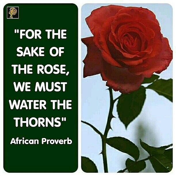 we know that almost every rose has thorns life is like a rose it