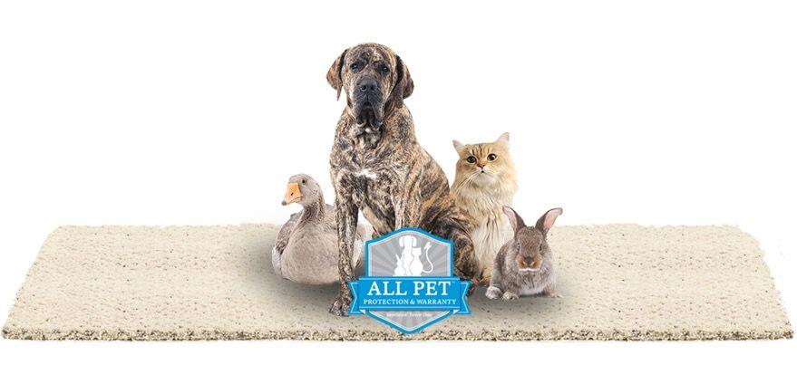 Instant Rebates with the Karastan All Pet Sale | The Bockrath Blog  www.bockrathflooring.com