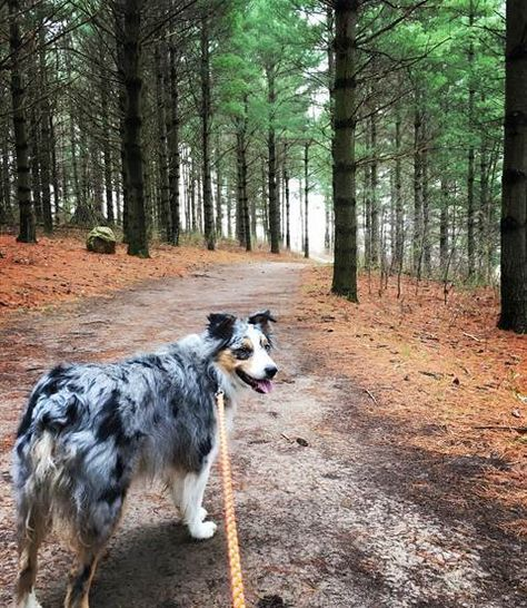 Your Dog Will Love These 6 Minnesota Hikes & Breweries