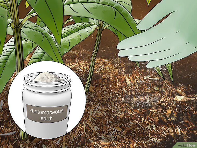 Get rid of millipedes home remedies house plants plants