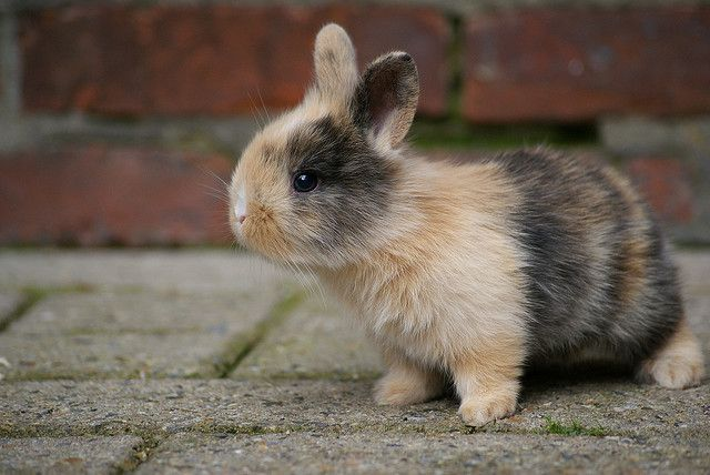 i want a bunny so bad, maybe if i keep pinning pictures Steve will get the hint.