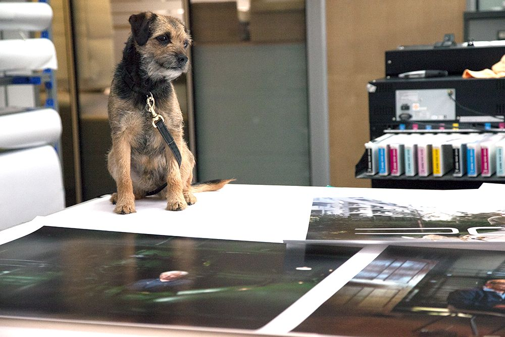 Little Amos came in last week with his owner, Dylan Collard, to check over Dylan's entries for the Taylor Wessing Photographic Portrait Prize... He didn't say much, but we think that he approved. Have you seen our special Taylor Wessing print offer? We're making your entry easier with a free archival sleeve & free delivery! Learn more here: http://bit.ly/Taylor_Wessing_PP_Offer Check out Dylan's work here: http://bit.ly/Dylan_Collard #dog #prints #lablife #printing #photography #exhibition