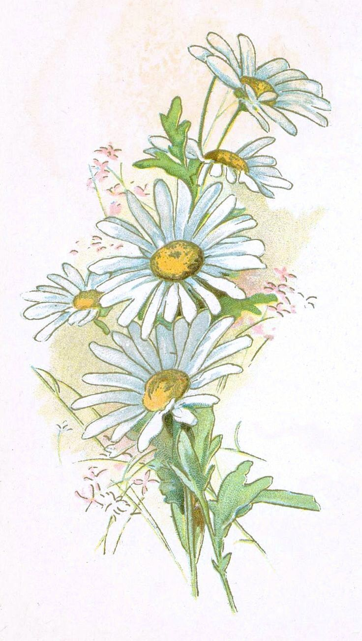 Pin by ирина on Роспись стен in 2019 Watercolor daisy