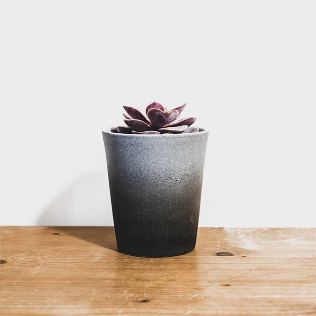 Gracias a que existen los mini cactus y Suculentas babies puedo hacer mini colgadores en macrame que son preciosidad pura. Porque las cosas minis son completa bonitez ya de por sí, ¿verdad? ❣ . . . #cactus #succulent #minisucculent #tinyplants #minimacrame #planthanger #macrame #pothangers #macramehangingplants #homedecor #plantsdecoration #ouiclementine