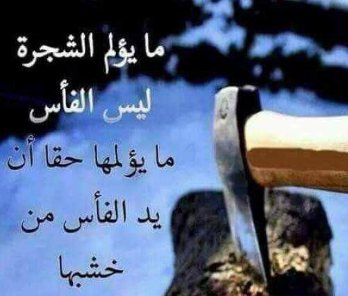 نتيجة بحث الصور عن صور مكتوب عليها ضربة القريب توجع الف مرة من الغريب Funny Arabic Quotes Arabic Quotes Words Quotes