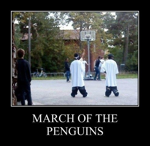March of the Penguins  - funny pictures #funnypictures