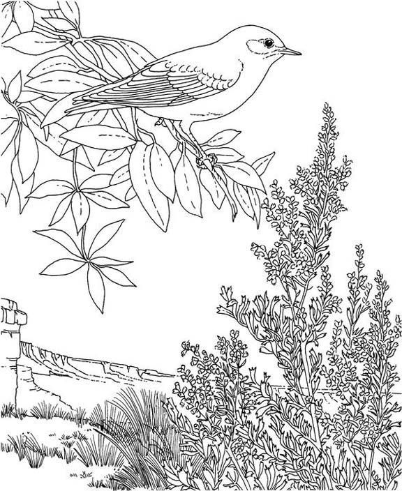 Flower Page Printable Coloring Sheets Bird And State Mountain Bluebird Sagebrush