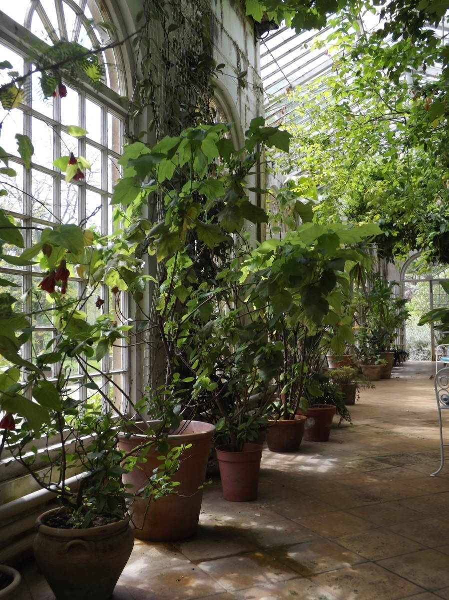 Mapperton Gardens Oh for an Orangery (With images