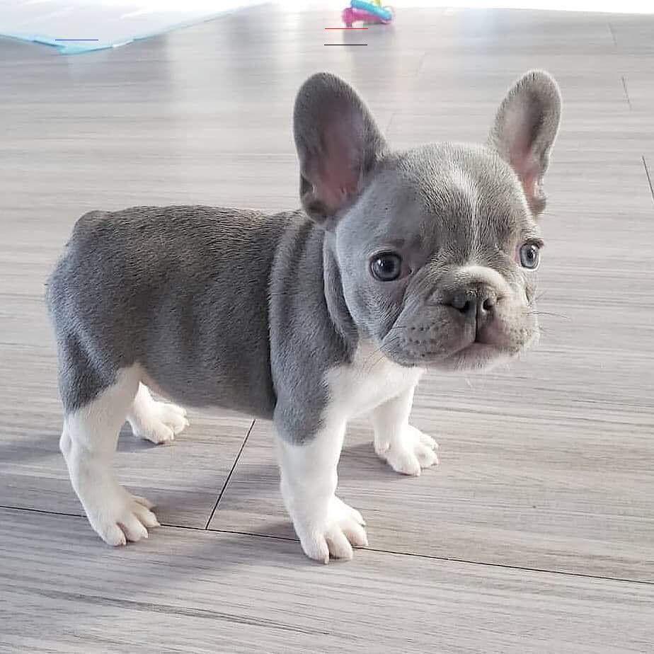 Pin Von Anastasia Rozina Auf Stephanie Shenk In 2020 Babyhunde