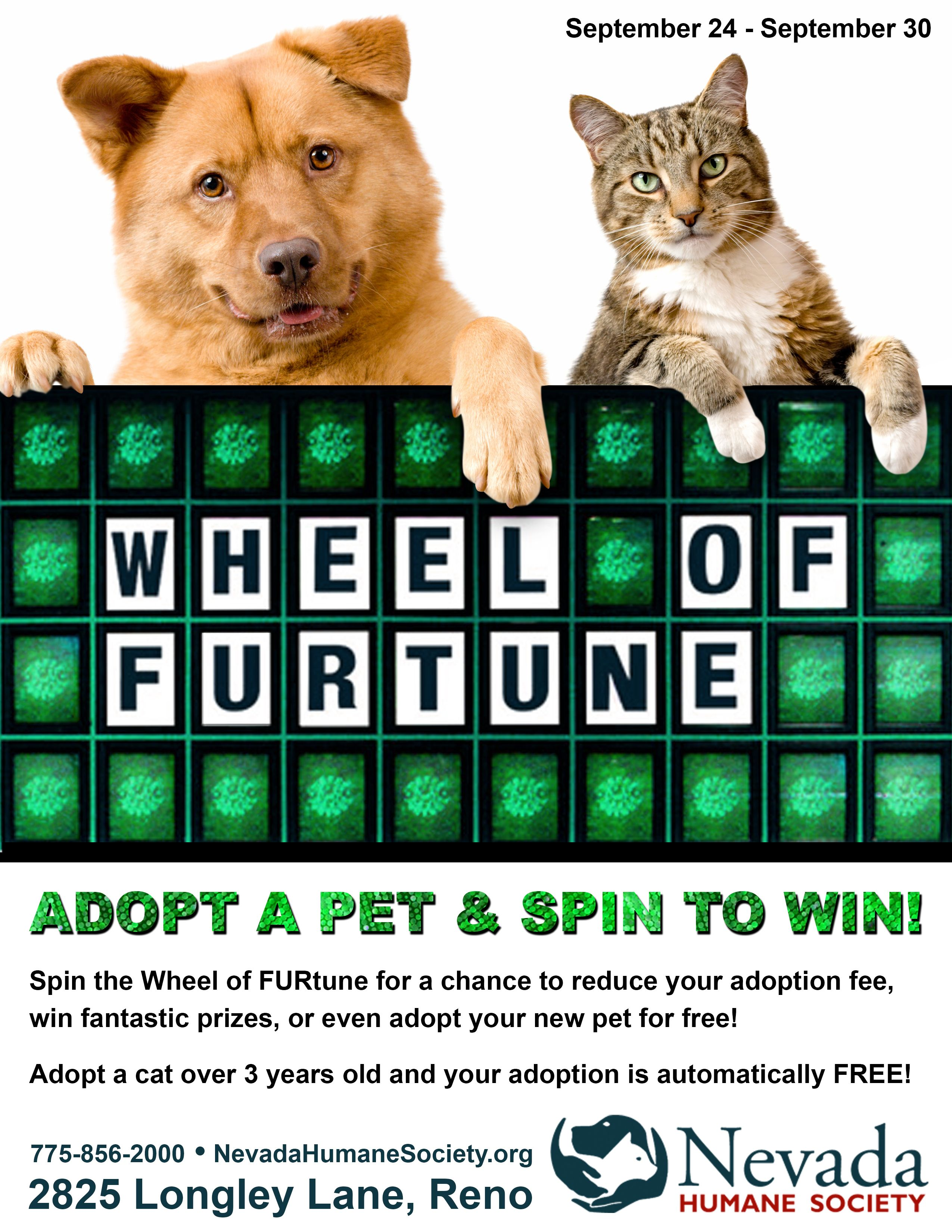 Wheel of FURtune! Cat adoption, Animal rescue, Humane