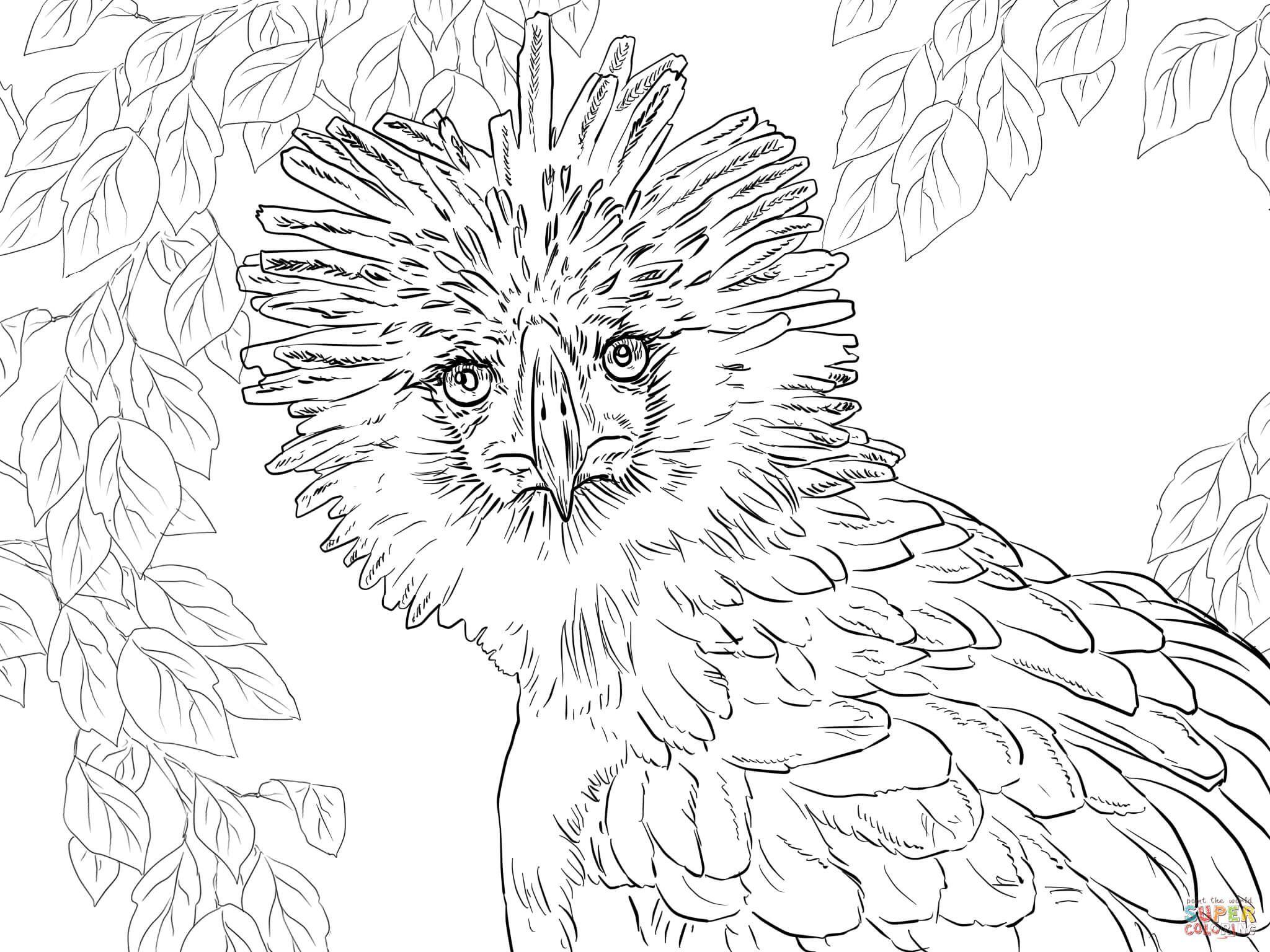 Retrato del guila de Filipinas Super Coloring pjaros y aves