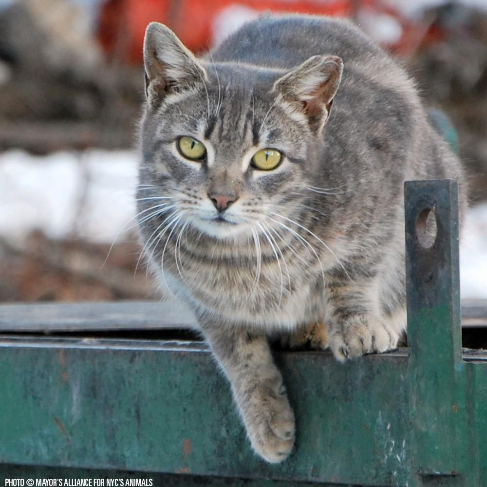 Life Saving Resources Needed For Nyc S Feral Stray Cats At The Animal Rescue Site With Images Animals