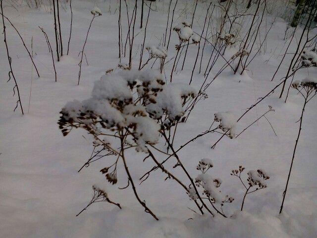 Hyvä talvi