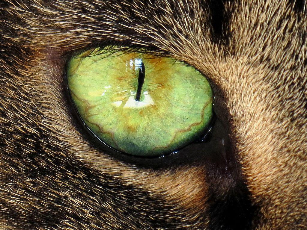 Сонник глаза любимого во сне — увиденные глаза во сне считаются одним из самых таинственных и загадочных символов, когда снятся глаза любимого человека можно понять что сон плохого вам не принесет, ведь это глаза вашего близкого человека.