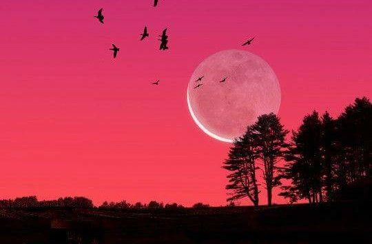 Full Moon For April 2016 The Pink When Is Next Phases Best Dayore From Old Farmers Almanac