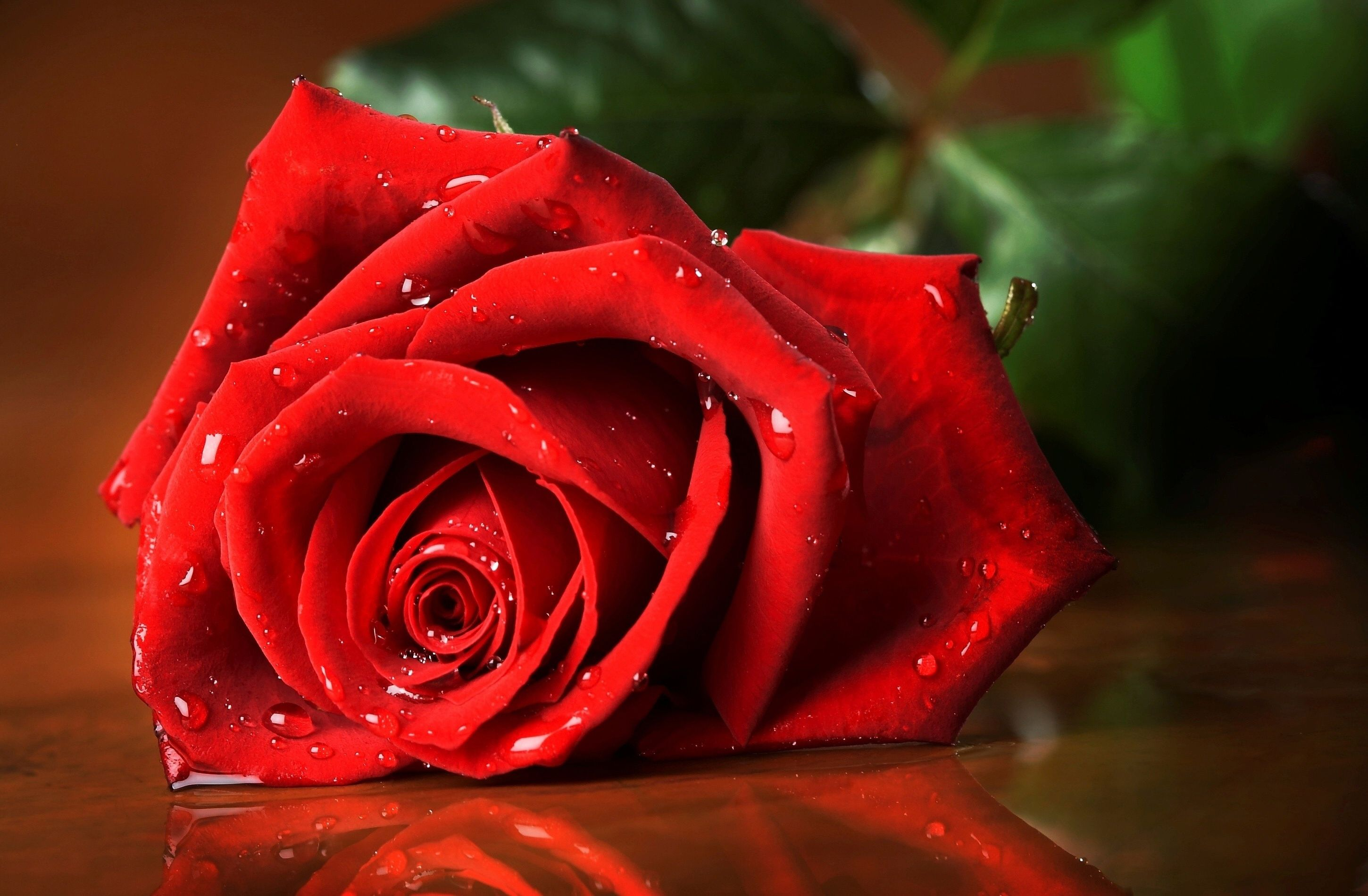 Best Images Of Love Rose Hd Love Rose Hd Wallpaper Rocks Wallpaper Hd Pertaining To Best Images Of Love Rose H Rose Wallpaper Beautiful Red Roses Red Roses