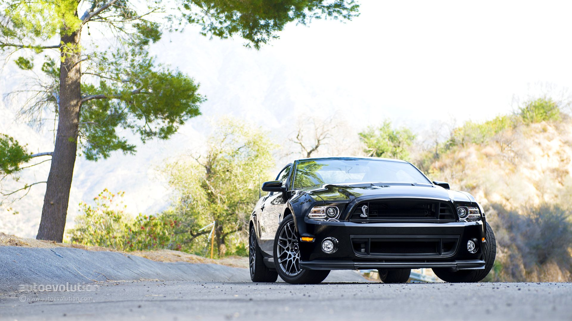 2014 ford mustang shelby gt500 the shelby mustang retains the classic muscle car recipe