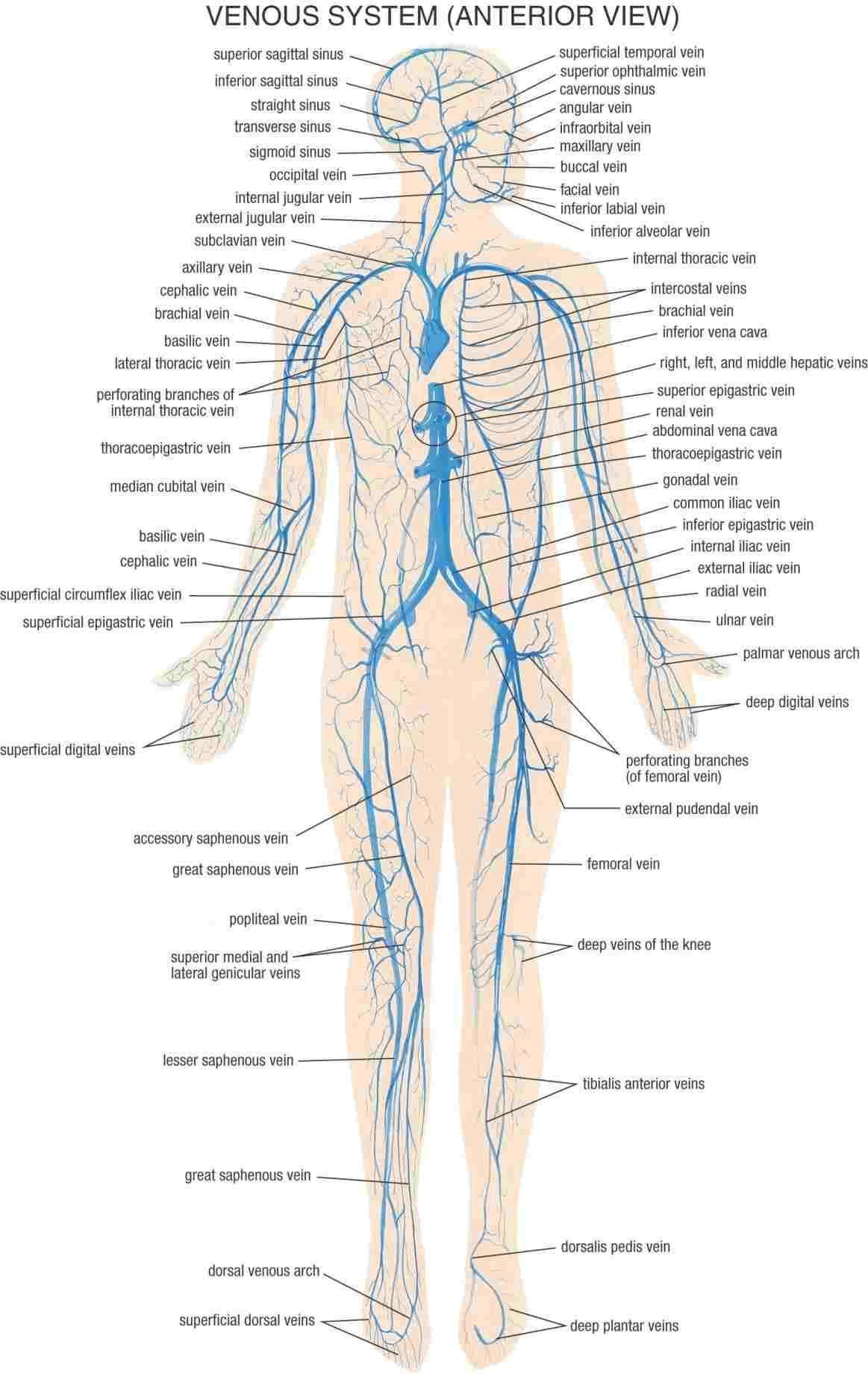 Simple Pain Assessment Worksheet