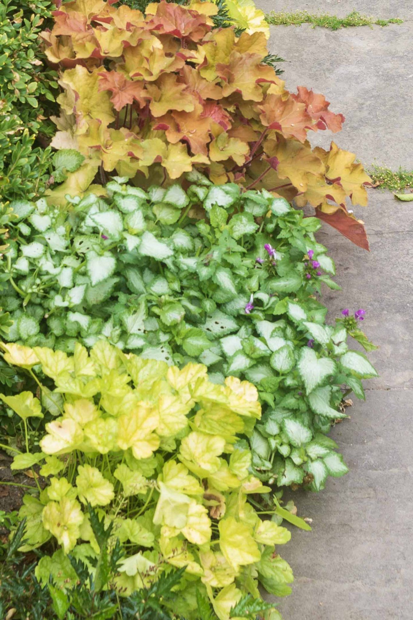 Perennial Ground Cover Full Sun: Perennial Ground Cover (21 Low-Growing Plants That Thrive