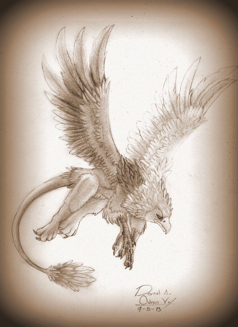 Hippogriff Hipogrifo By Natthan54 Griffin Drawing Mythical Animal Animal Drawings